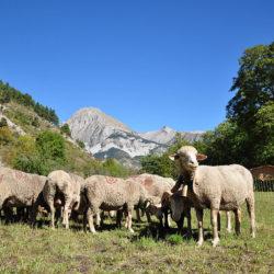 Les élus de la montagne plaident la défense de l'agropastoralisme face aux menaces du prédateur lors d'une rencontre avec Elisabeth Borne