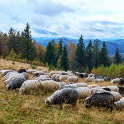 Les communes pastorales ont désormais leur fédération