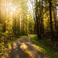 """""""La forêt et la filière bois à la croisée des chemins : l'arbre des possibles"""""""
